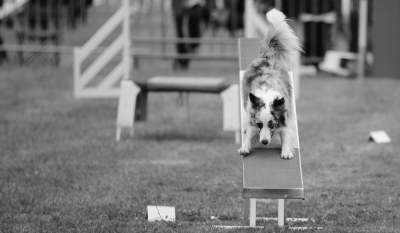 Concours Agility 25 Mars 2018