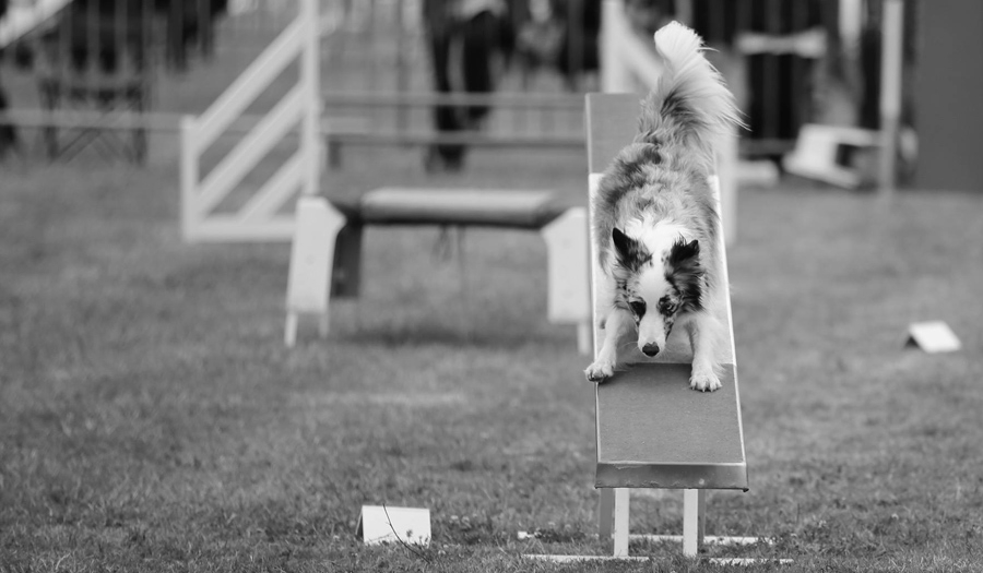 Concours Agility 29 Mars 2020